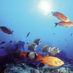 Abtauchen in Thailand und mit den Fischen schwimmen