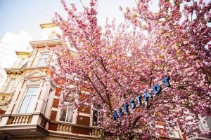 Gesichter-Bonns-Kirschblüte-IMG_6452-Druck