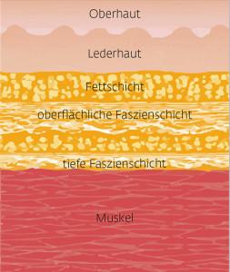 Top-Magazin-Stuttgart-Fruehjahr-2017-Die-Fazination-der-Faszien-2