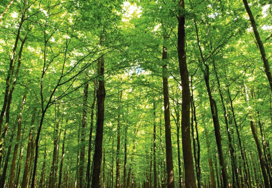 Der Wald ruft!