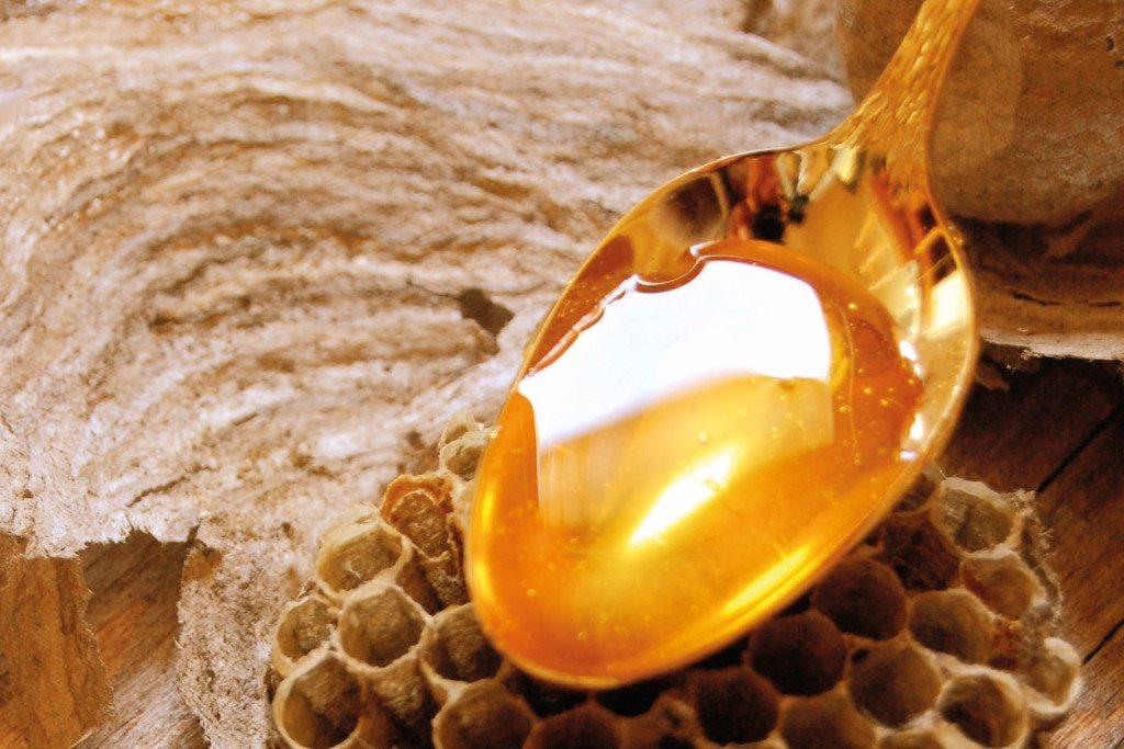 Heilen mit Honig